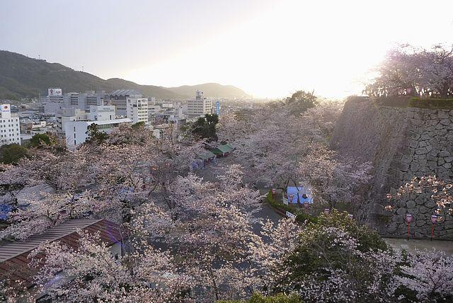 津山城鶴山公園の夕桜