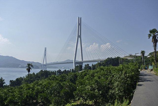 ミカン畑と多々羅大橋