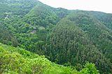 大音寺山横谷城跡から激坂を見下ろす