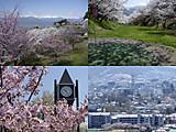 桜のアルプス公園等