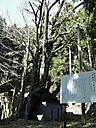 Senzoichou