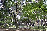 Hayashijo