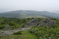 Taneyama