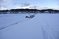 Snowokd